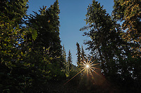 The morning sun shines the trees along the Naches Peak Loop Trail in Mt. Rainier National Park.
