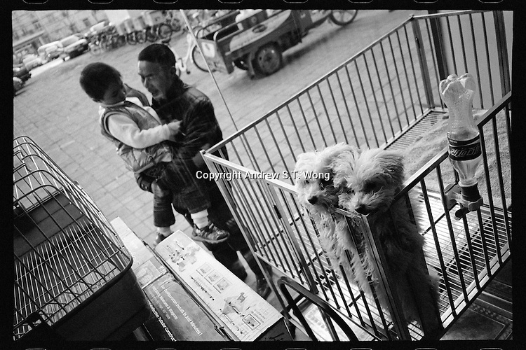 A Chinese father and son look at two puppies at a pet shop in Beijing, China in March, 2011. (Minolta TC-1, 28mm f3.5, Kodak Tri-X film)