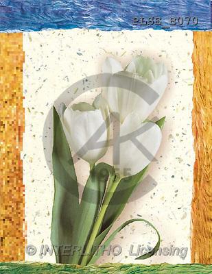Jacek, FLOWERS, portrait, macro, photos, PLSE, PLSEB070,#F# Blumen, flores, retrato