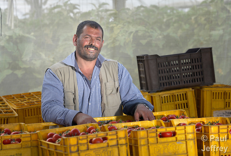 Abdulah Sliman stands with tomatoes he has harvested in Al Fukari, Gaza. The farmer grows crops in several greenhouses, and uses a catchment system to capture the rainwater that falls on the structures. That water he collects in a pond and mixes with increasingly saline groundwater he pumps from a well. The system allows him to produce a greater quantity of more lucrative crops, at a greater profit because he isn't forced to buy as much water for irrigation. Sliman and several other farmers in the community received assistance in building their systems from Diakonie Katastrophenhilfe, a member of the ACT Alliance. In the wake of the devastating 2014 war, ACT Alliance members are supporting health care, vocational training, rehabilitation of housing and water systems, psycho-social care, and other humanitarian actions throughout the besieged Palestinian territory. Quality water is growing increasingly scarce in Gaza, as Israel drains the aquifer for its own development, pulling salt water into the aquifer from the west.