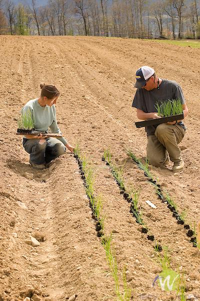 Walnut Run Farm. Spring planting. Lara and James planting onion starts.