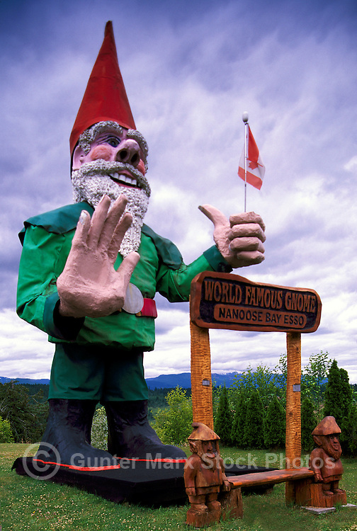 The Famous Worldu0027s Largest Giant Gnome At Nanoose Bay, BC, Vancouver  Island, British