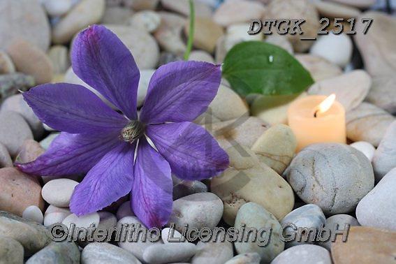 Gisela, FLOWERS, BLUMEN, FLORES, photos+++++,DTGK2517,#f#, EVERYDAY