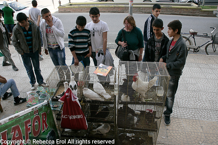 Caged birds for sale, Adiyman, Turkey