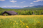 Barn and Blooming Farm Meadow with View of White Mountains in New Hampshire