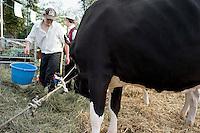 Cow contest