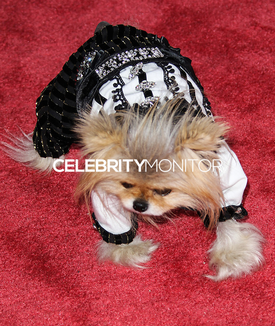 LOS ANGELES, CA - JUNE 06: Giggy attends the Beverly Hills Lifestyle Magazine 5 Year Anniversary held at Sofitel Hotel on June 6, 2013 in Los Angeles, California. (Photo by Celebrity Monitor)
