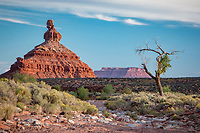 The statuesque sentinels in the Valley of the Gods, as well as other area features, are all sculpted from Cedar Mesa sandstone dating to the Permian age, 250 million years old. The 1200 foot thick sandstone was cemented by calcium carbonate interspersed with lenses of red siltstone and was deposited in huge sand dunes near the shores of an ancient sea. Erosion by water, wind and ice over millions of years chiseled rock formations into the unique shapes we see today.
