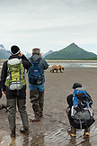 USA, Alaska, Homer, hikers photograph a grizzly bear, Katmai National Park, Katmai Peninsula, Hallow Bay, Gulf of Alaska
