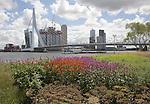 Erasmusbrug bridge spanning River Maas, Rotterdam, South Holland, Netherlands