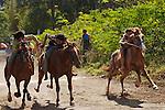 Horse racing in the streets of Hanga Roa, Rapa Nui, Chile