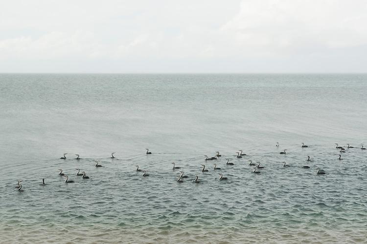 Cormorant species in the sea. Shark Bay Salt, a solar salt farm, in Western Australia.