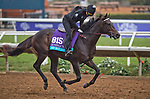 DEL MAR, CA - OCTOBER 31: My Boy Jack, owned by Don't Tell My Wife Stables & Monomoy Stables LLC and trained by J. Keith Desormeaux, exercises in preparation for Breeders' Cup Juvenile Turf at Del Mar Thoroughbred Club on {mothname} 31, 2017 in Del Mar, California. (Photo by Scott Serio/Eclipse Sportswire/Breeders Cup)