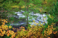 North Umpqua River with fall colored Big Leaf Maples and green alders. Oregon