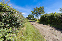 Farm track with mature hedgerows - Norfolk, July