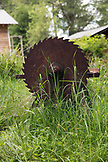 CANADA, Vancouver, British Columbia, an old rusty saw blade in the tall grass on Gambier Island, in the Howe Sound