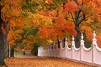 AJ5702, white fence, autumn, fall foliage, Vermont, White fence at the along a cluster of beautiful colorful maple trees in the fall in Old Bennington Village in Bennington County in the state of Vermont.