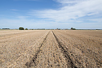 Subsoiled tramlines  <br /> Picture Tim Scrivener 07850 303986<br /> &hellip;.covering agriculture in the UK&hellip;.