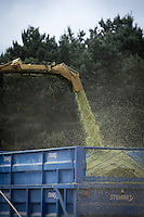Trailer being loaded with forgaed whole crop rye to be used as anaerobic digestion feedstock