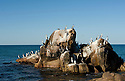 Birds on a rock at Meelup, Western Australia.