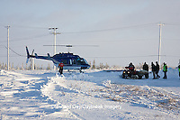 01874-11716 Polar Bear (Ursus maritimus) biologists preparing to airlift bear from Polar Bear Compound, Churchill MB