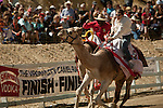 Kristy Bond, right, of Mt. Shasta, Calif., on her way to a win in a heat race at the 51st annual International Camel Races in Virginia City, Nevada  September 12, 2010. .CREDIT: Max Whittaker for The Wall Street Journal.CAMEL