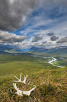 Caribou antler in the tundra overlooking the North Fork of the Koyukuk River in the Gates of the Arctic National Park, Brooks Range, Alaska.