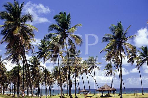 Itaparica, Brazil. Palm trees fringing the beach.