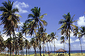 Itaparica, Brazil. Palm trees fringing the beach.