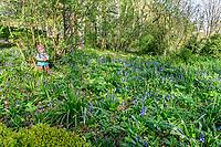 France, Indre-et-Loire, Lémeré, jardins et château du Rivau au printemps (avril), la Forêt enchantée, jacinthes des bois (Hyacinthoides non-scripta) et nains de jardin en sous-bois