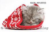 Kim, CHRISTMAS ANIMALS, photos, GBJBWP18503,#XA# stickers