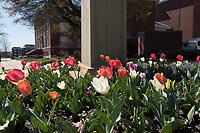 Tulips next to WWI doughboy statue.<br />  (photo by Megan Bean / &copy; Mississippi State University)