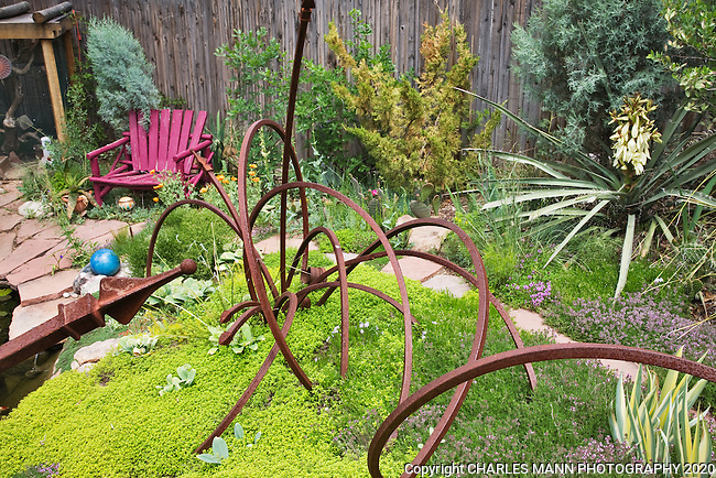 Dan Johnson used some recycled metal angle iron and created a dynamic sculpture to set off a bed of charteuse thyme in his Denver garden.
