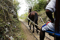 """To get to some cenotes one is pulled on a """"truc"""" by a horse.  The truc runs on tracks which were laid during the  days of the heneken plantations, they were used to transport and heneken from the fields to the haciendas."""