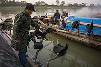 Fishermen prepare cormorants for fishing at dawn in Poyang county at Poyang Lake, Jiangxi Province, December 2014. Poyang Lake, located in the north of Jiangxi Province, is the largest freshwater lake in China. It fluctuates dramatically between wet and dry seasons, from 3,500 square kilometres down to about 200 square kilometres. The lake provides a habitat for half a million migratory birds.