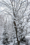 Trees recently snowed on during a Wisconsin Winter greifenhagen