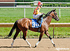 Do It for Don before The Oh Say Stakes at Delaware Park on 6/29/13