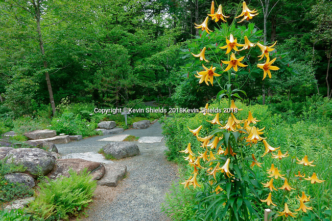 Wild Gardens of Acadia, Acadia National Park, Maine, USA