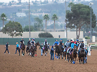 DEL MAR, CA - NOVEMBER 02: Horses come on to track to exercise at Del Mar Thoroughbred Club on November 2, 2017 in Del Mar, California. (Photo by Sue Kawczynski/Eclipse Sportswire/Breeders Cup)