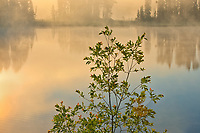 Isabel Lake in morning fog<br />