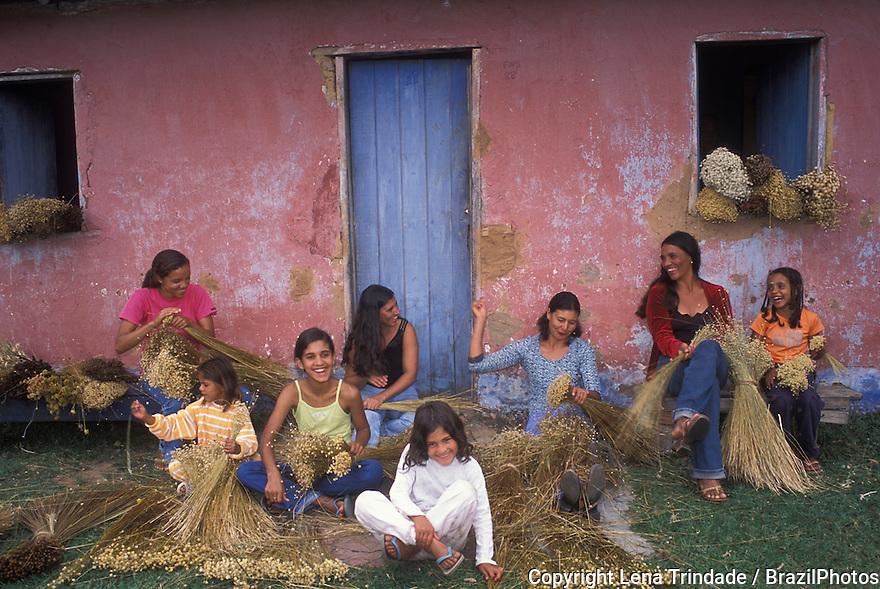 Craftsmanship. Artisans cooperative. Cerrado flowers ( Sempre-vivas - Perennials - Eriocaulacae ) that will be used to make carpets and lampshades, City: Galheiros, Vale do Jequitinhonha; State: Minas Gerais, Brazil. Family work, women and their children work together.