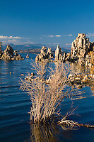 Majestic Mono Lake tufas with morning side lighting