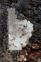 Museo all'aperto della Dolina del XV Bersaglieri, presso il monte Sei Busi. Questo Museo e' formato da tre doline (depressioni del terreno carsico). Cio' che rimane di un piccolo ospedale da campo costruito all'interno di una dolina. Un pezzo di intonaco che si e' salvato rivela parte dei nomi dei dottori che hanno operato nell'ospedale<br /> The 'Dolina of the XV Beraglieri', next Mount Sei Busi. The ruins of a little hospital built into one of the carsic holes. On a wall what's left of the names of the doctors working into the hopsital<br /> Redipuglia 03-09-2014 Lungo tutto il confine del Friuli Venezia Giulia, e nella fattispecie nella zona del Carso isontino, si snoda quello che durante la Prima Guerra Mondiale, o Grande Guerra, era chiamato il fronte orientale, conteso tra l'esercito italiano e quello austro-ungarico. La zona del fiume Isonzo, obiettivo strategico, fu teatro di ben 11 battaglie e di una estenuante guerra di posizione, costata la vita migliaia di soldati. Numerose sono ancora le testimonianze di quei terribili giorni sulle colline isontine, per cui, con i patrocinio della comunit&agrave;' europea, sono stati costituiti dei veri 'musei all' aperto' con percorsi che permettono di visitare i luoghi pi&ugrave;' importanti di quelle battaglie.<br /> Along the northern borders of Friuli Venezia Giulia, Italy, was part of the called Eastern Front during the 'World War I' also said the 'Great War'. The Isonzo river, a strategic target, was theatre of 11 battles between italian and Austro-Hungarian troops, where hundred thousand soldiers lost their lives. <br /> To remember that war, a series of 'open air museums' where established, along the most important places where the battles took place and where is still possible to see trenched systems, hospitals, mass graves, barbed wire ecc.<br /> Photo Samantha Zucchi Insidefoto