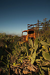 Old truck abandoned  in field surrounded by prickly pears. Tenerife, Canary Islands, Spain