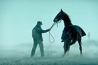 Amish teen holds tightly to horse's harness during snow blizzard with wind blowing hard on farm. Amish male. Lancaster Pennsylvania United States farm.