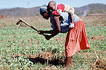 (96/39/06)-CA Shamrock-Chegutu-Zimbabwe - June 27, 1996 -- A woman/mother carrying her child while working/weeding on a plot with peas; FNS/SAN, agriculture, rural, labour -- Photo: © HorstWagner.eu