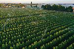 Foto: VidiPhoto<br /> <br /> VALBURG – Opnieuw moesten fruittelers woensdagmorgen er vroeg uit vanwege de nachtvorst. Bij fruitbedrijf T. A. van Blijderveen en Zn. in Valburg in de Betuwe ging vanmorgen rond half vijf de beregeningsinstallatie aan om het fruit te beschermen. Het bedrijf, waarin drie broers participeren, bezit 30 ha. appels en peren. Dit jaar zijn van 11-14 mei de zogenoemde IJsheiligen, de laatste periode in het jaar dat er nog nachtvorst kan optreden. Ook in de nacht van donderdag op vrijdag gaat het nog vriezen. De meeste fruittelers hebben dit jaar al 8-10 keer moeten beregenen. Zo vaak is nog niet eerder voorgekomen. De jonge vruchten zijn op dit moment zo gevoelig dat ze niets kunnen verdragen. Nachtvorst zorgt zonder berscherming door het water nu voor beschadiging van de huid, zodat appels en peren niet meer als klasse 1 verkocht kunnen worden.
