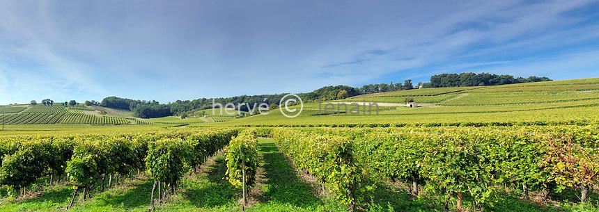 France, Charente (16), Bouteville, vignoble de Cognac // France, Charente, Bouteville, Cognac vineyard