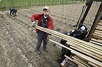 Foto: VidiPhoto<br /> <br /> HETEREN &ndash; De huidige klimaathype is een klein goudmijntje voor boomkwekers. Gemeenten, bedrijven, organisaties, particulieren... allemaal willen ze bomen planten. Veel bomen. Er is zelfs meer vraag dan aanbod. Poolse medewerkers van loonwerker Gert Brienesse uit Opheusden hebben dinsdag hun handen vol aan het plaatsen van 45.000 bamboestokken. De stokken moeten straks evenzoveel -inmiddels geplante- geocculeerde acers (populair in lanen en parken) recht omhoog laten groeien. Het perceel in het Betuwese Heteren is van boomkweker Combinatie Mauritz. Brienesse is met zijn speciale stokkenspuiter, waar er maar een paar van zijn in Nederland, ingehuurd om in sneltreinvaart de bamboestokken neer te zetten. Het tempo ligt op zo&rsquo;n 5000 stokken per dag. De machine met 800 liter water spuit onder hoge druk een gat in de grond, waar vervolgens de bamboestok in wordt gedrukt. De veelgevraagde machine wordt door Brienesse in heel Europa ingezet. Er is op dit moment meer vraag naar jonge bomen dan aanbod en de boomprijzen zijn hoog.