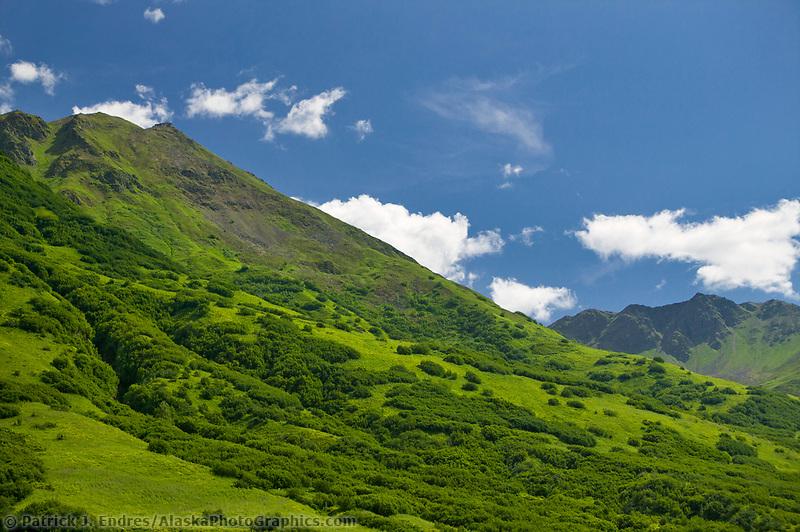 Fireweed, near Hatcher Pass, Alaska